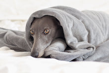 Load image into Gallery viewer, CUDDLE ME - Weighted Anxiety Dog Comfort Blanket