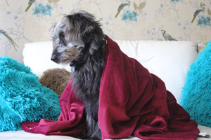 CUDDLE ME - Weighted Anxiety Dog Comfort Blanket