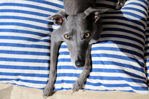 FRANCES - Vintage Stripe Linen Cushion Dog Bed