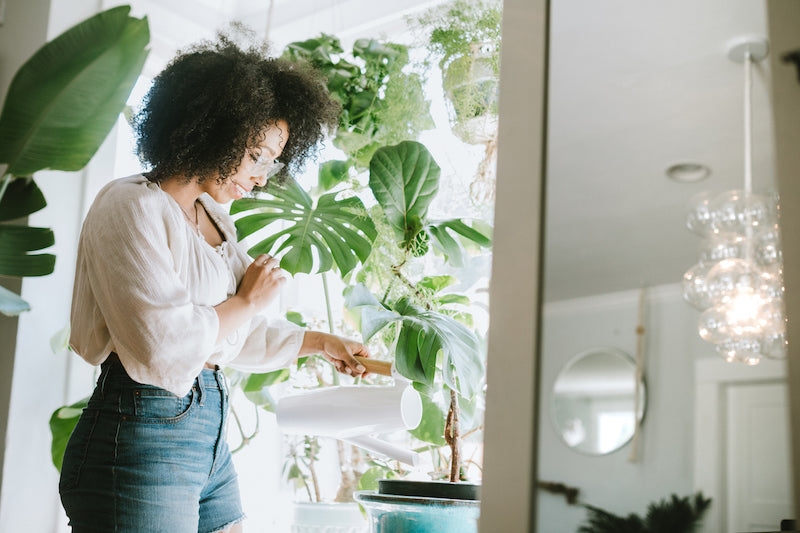 Here's Why you Need to Add Plants to Your Home