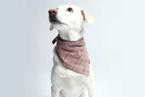 DOG BANDANA CHECK RED - LIGHT GREEN - Lavish Tails