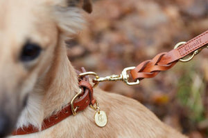 DOG COLLAR HYDE PARK COGNAC - Lavish Tails