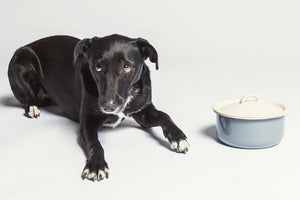 DOG BOWL GRANNY GREY WITH LID - Lavish Tails
