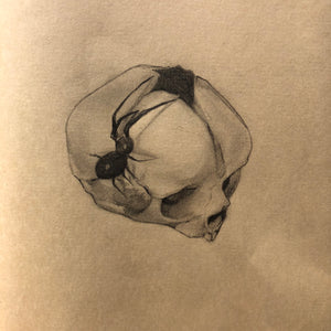 Indy Alexander, Dream Weaver, original framed drawing of a spider on a fetal skull on toned paper, framed on a white background in a white frame.