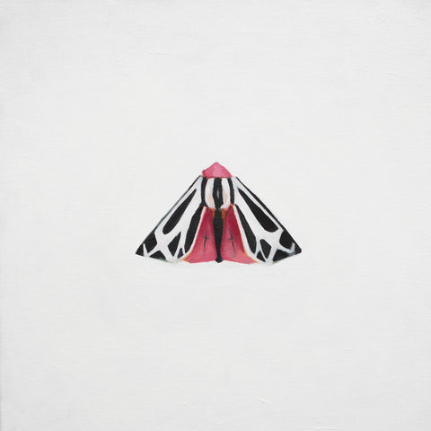 Indy Alexander, Under the Rose, representational oil painting of a moth with black and pink wings on a white background