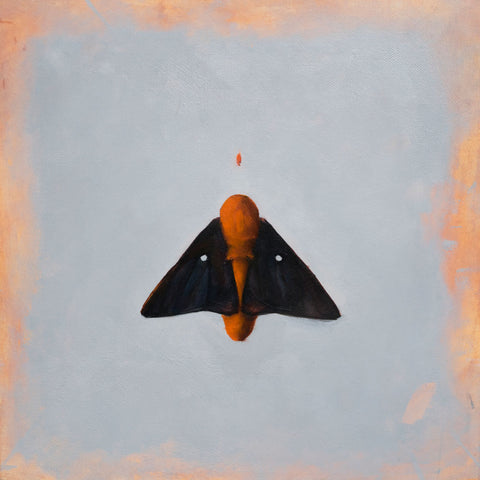Indy Alexander, Escapism, photo of an original oil painting on canvas of a black and orange moth and a grey background with orange border.