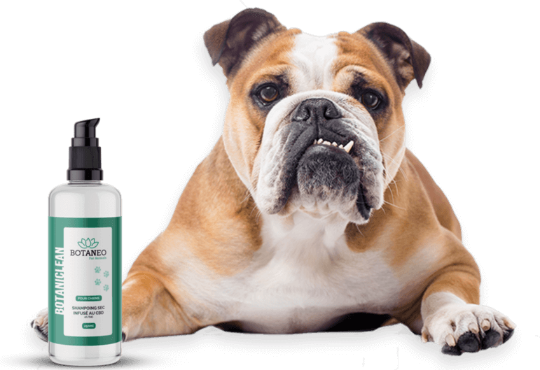 Shampoing CBD pour Chiens & Chats Botaneo