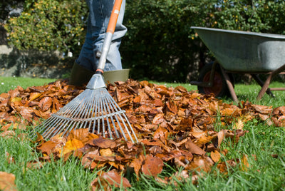Get Your Garden Ready for Autumn With Our Tips