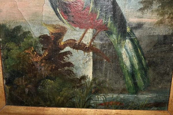 19th Cent Folk Art Oil Painting Birds of Paradise with Gilt Frame