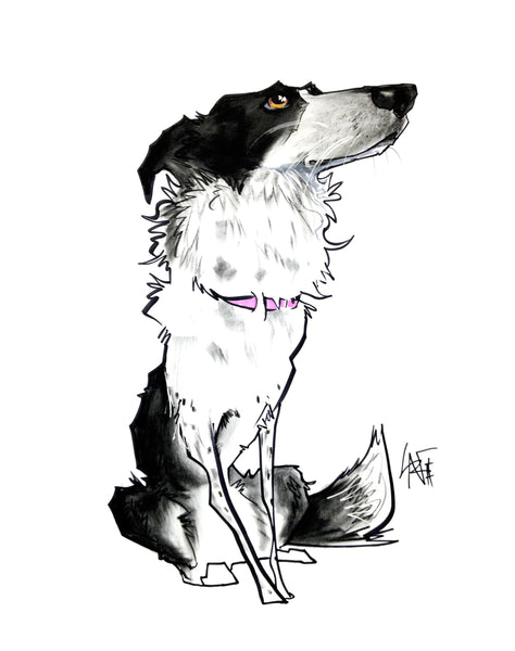 "Border Collie ""Canine Caricature"" Pet Portraits by John LaFree"