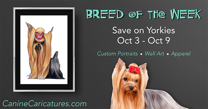 Canine Caricatures Breed of the Week - Yorkies
