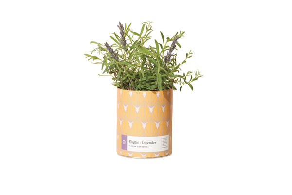 Waxed Planter - English Lavender - The Brant Foundation Shop