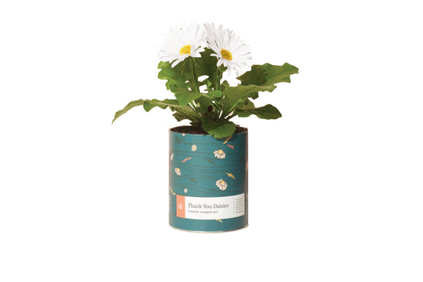 Wax Planter - Thank You Daisies - The Brant Foundation Shop