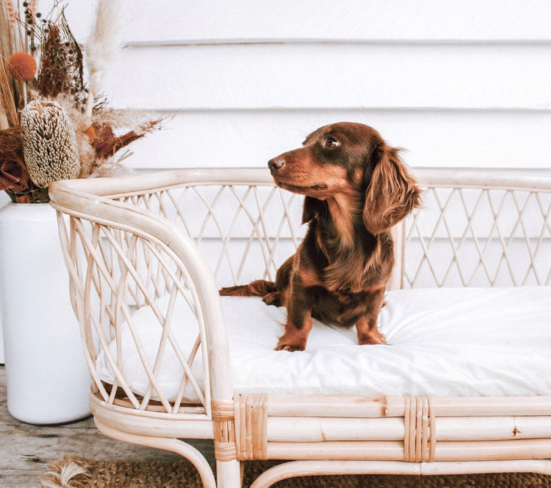 Remi Rattan Dog Bed (SHIPPING INVOICED SEPARATELY)