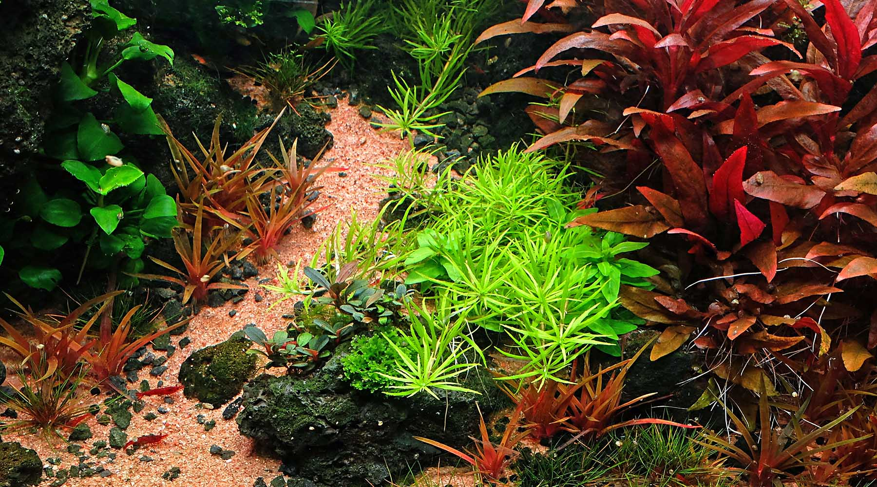 Complete planted aquarium substrate guide
