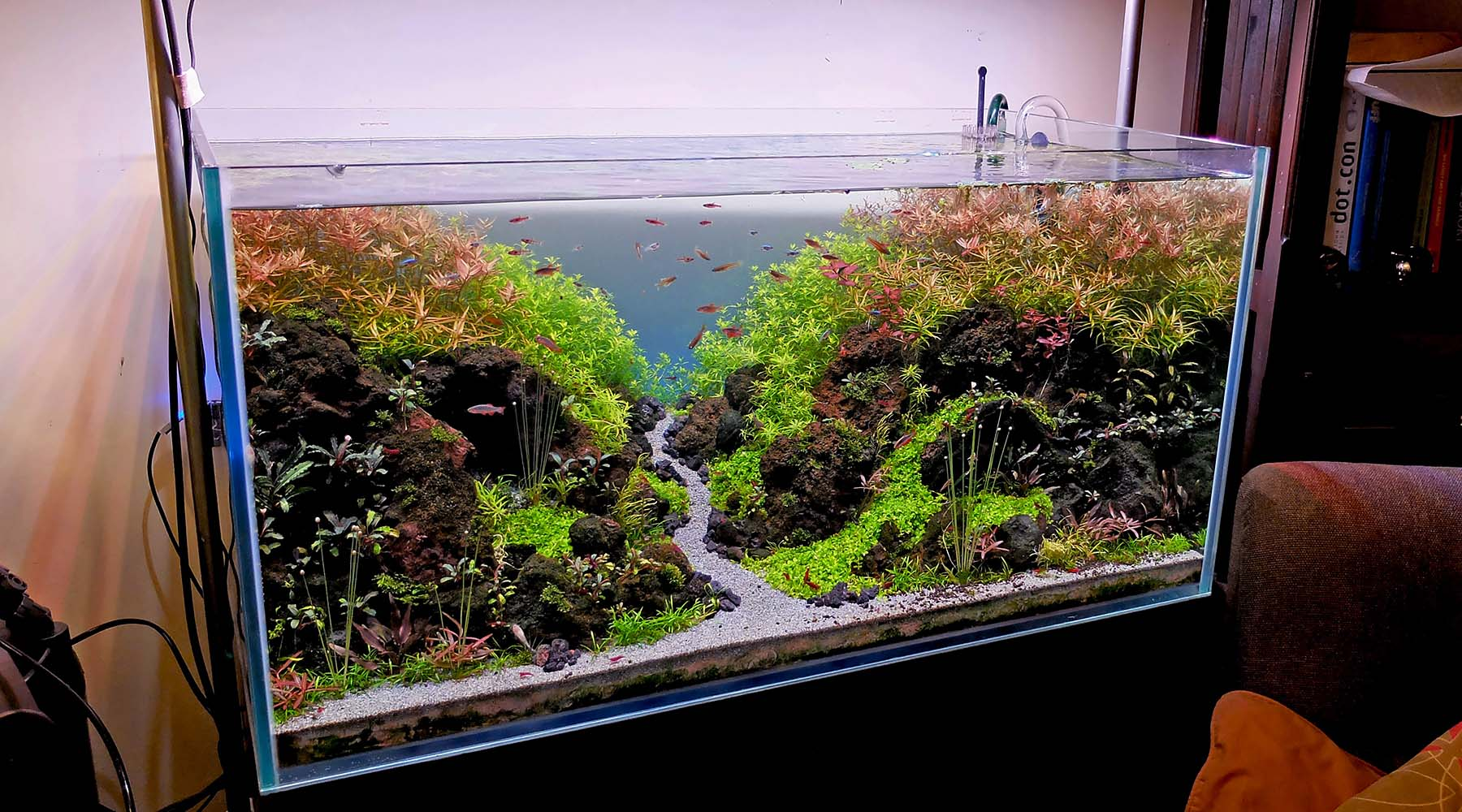Algae 101: what actually triggers algae in a planted tank