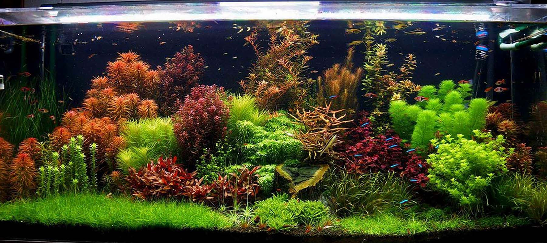 Aquascape Styles And Ideas The 2hr Aquarist