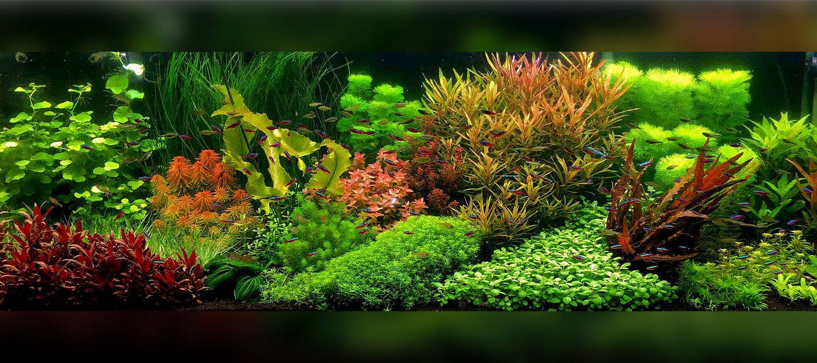 Aquascape Styles And Ideas Tagged Dutch Aquascape The 2hr Aquarist