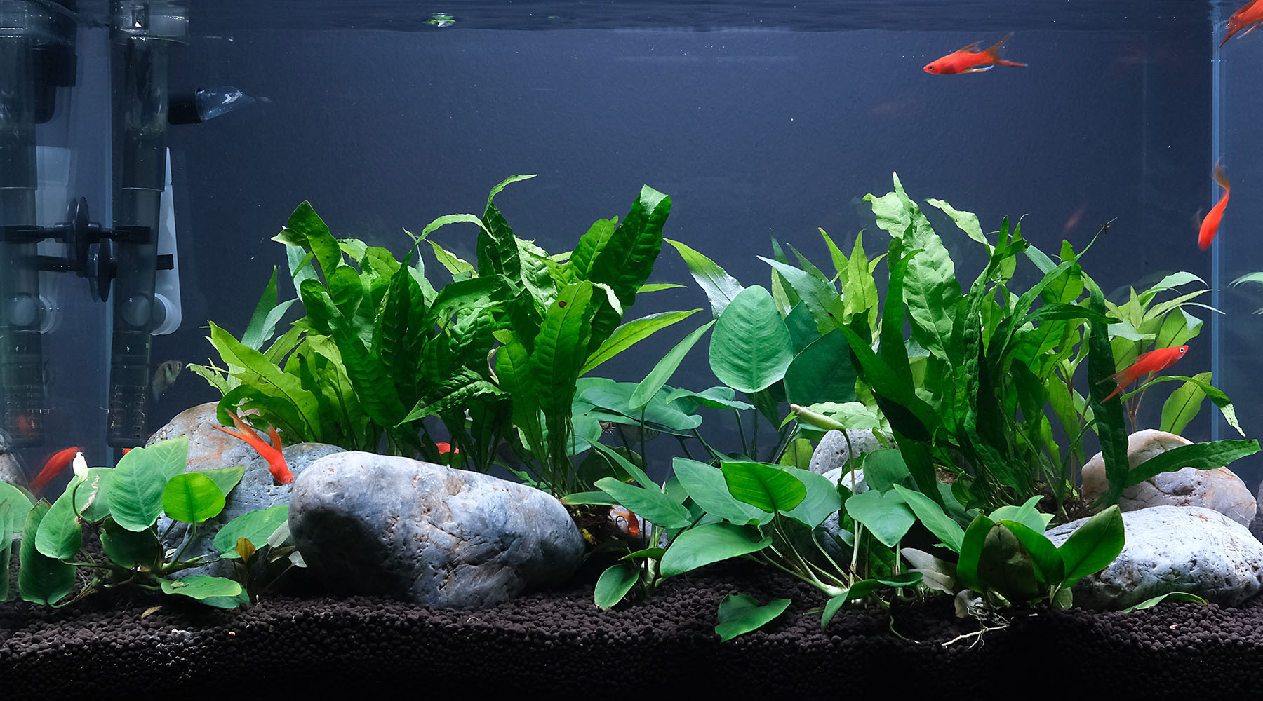 Fish Tank vs Planted Tank? 7 Differences