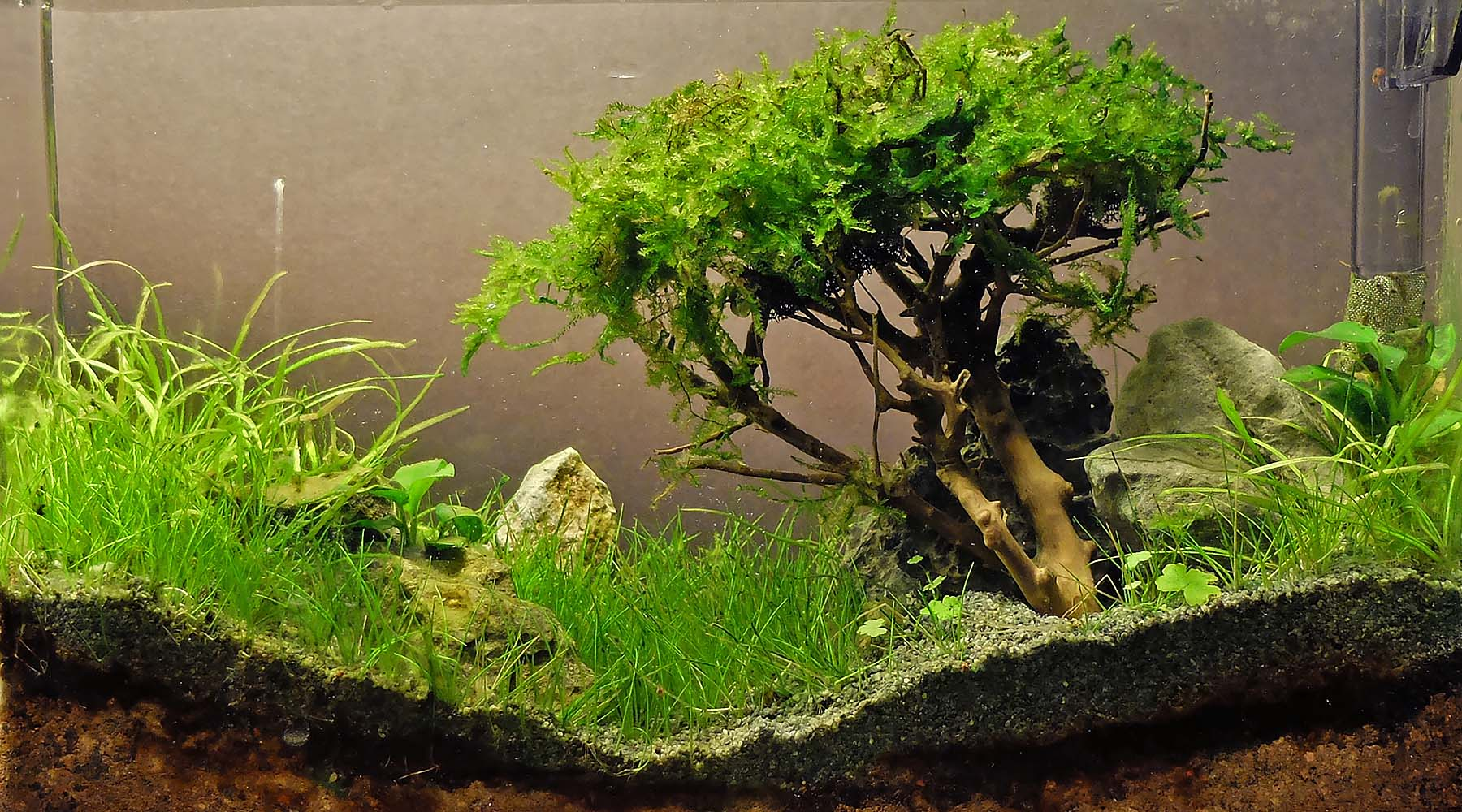 VIDEO: How to make a moss tree