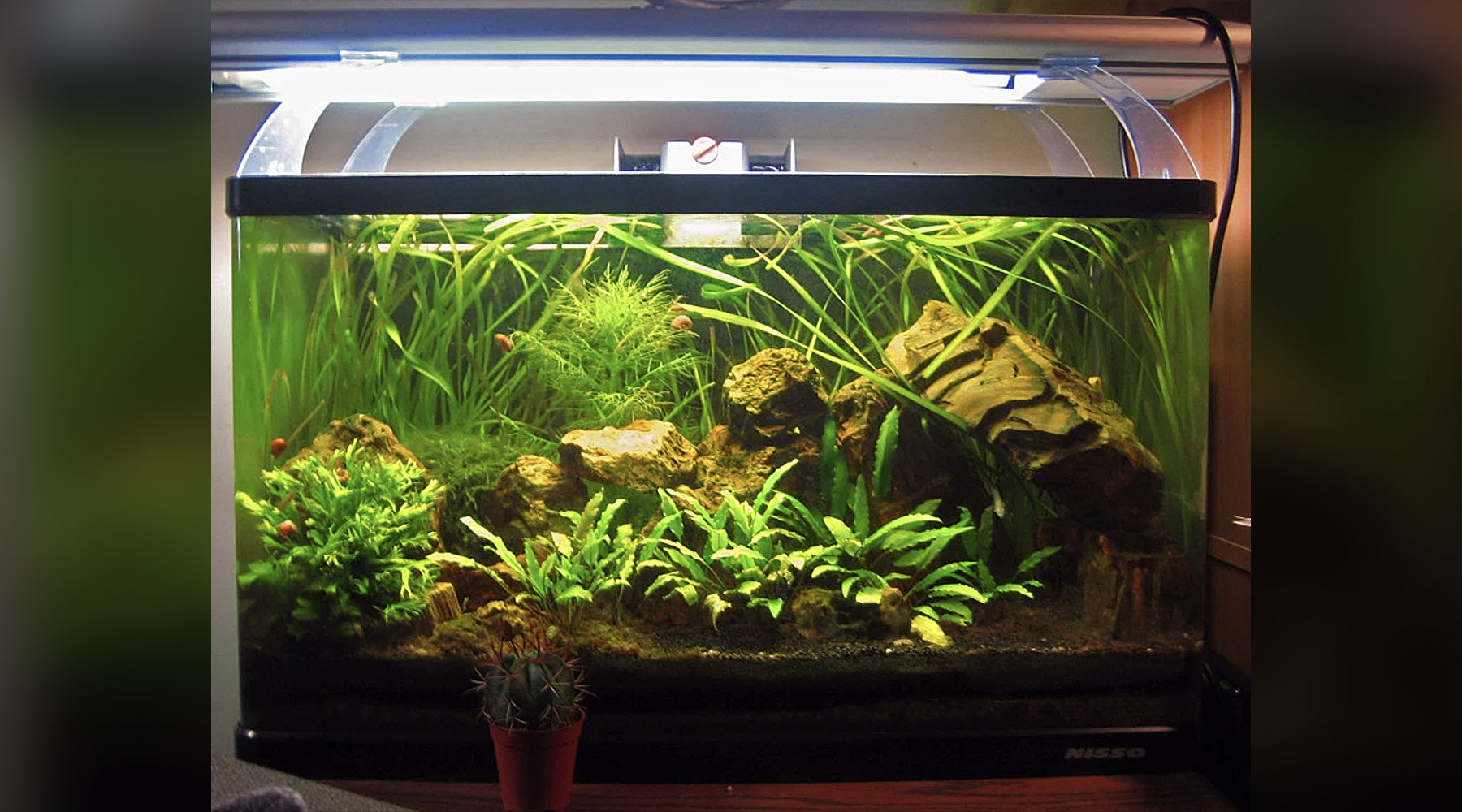 'No ferts, no dosing, no CO2' planted tanks, how valid are they?