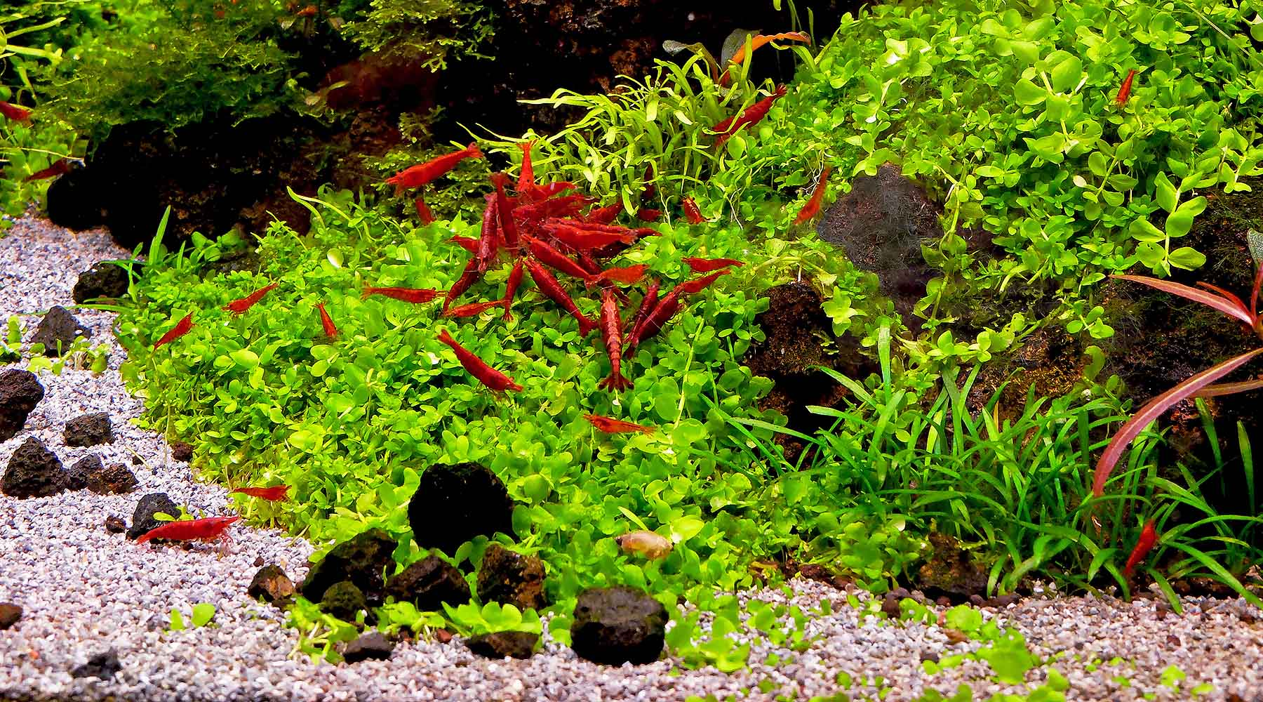 Is pH important in a planted aquarium ?