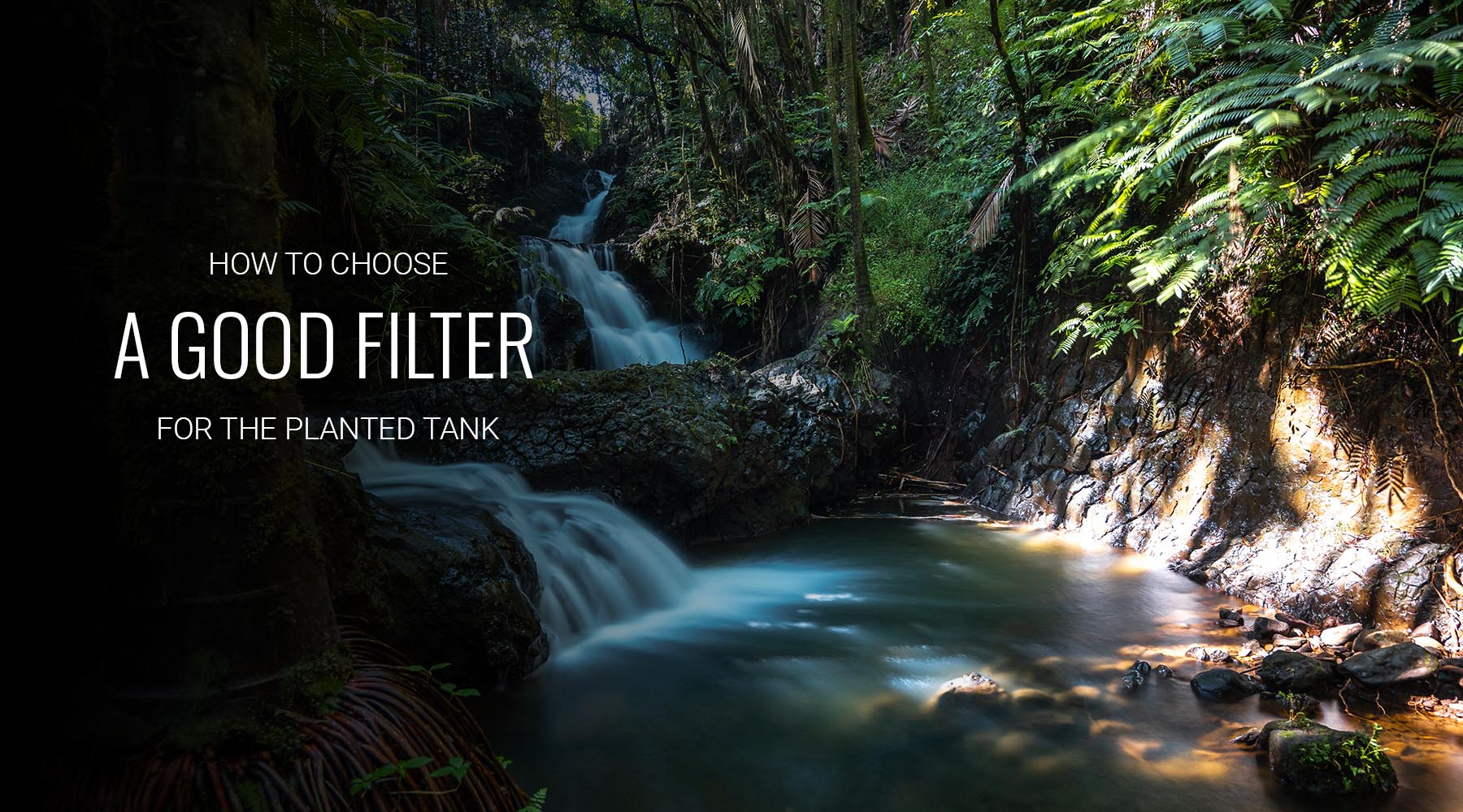 How to choose a good filter for planted aquariums