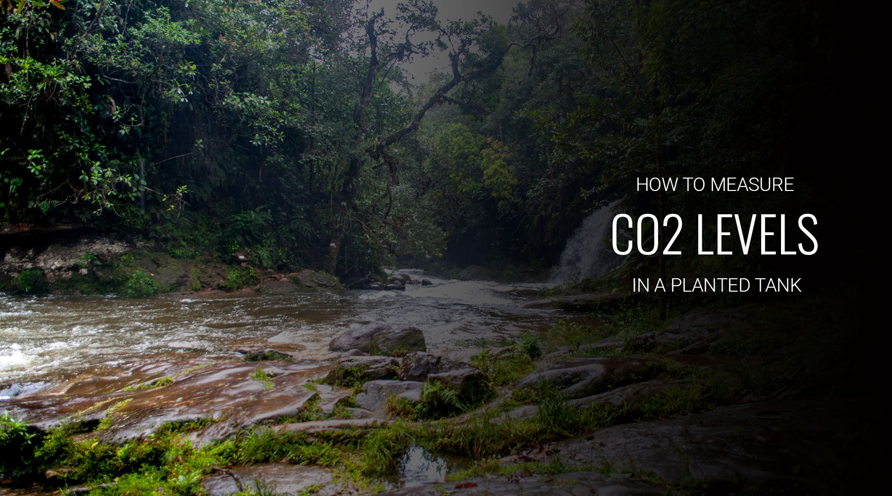 How to measure CO2 levels in an aquarium