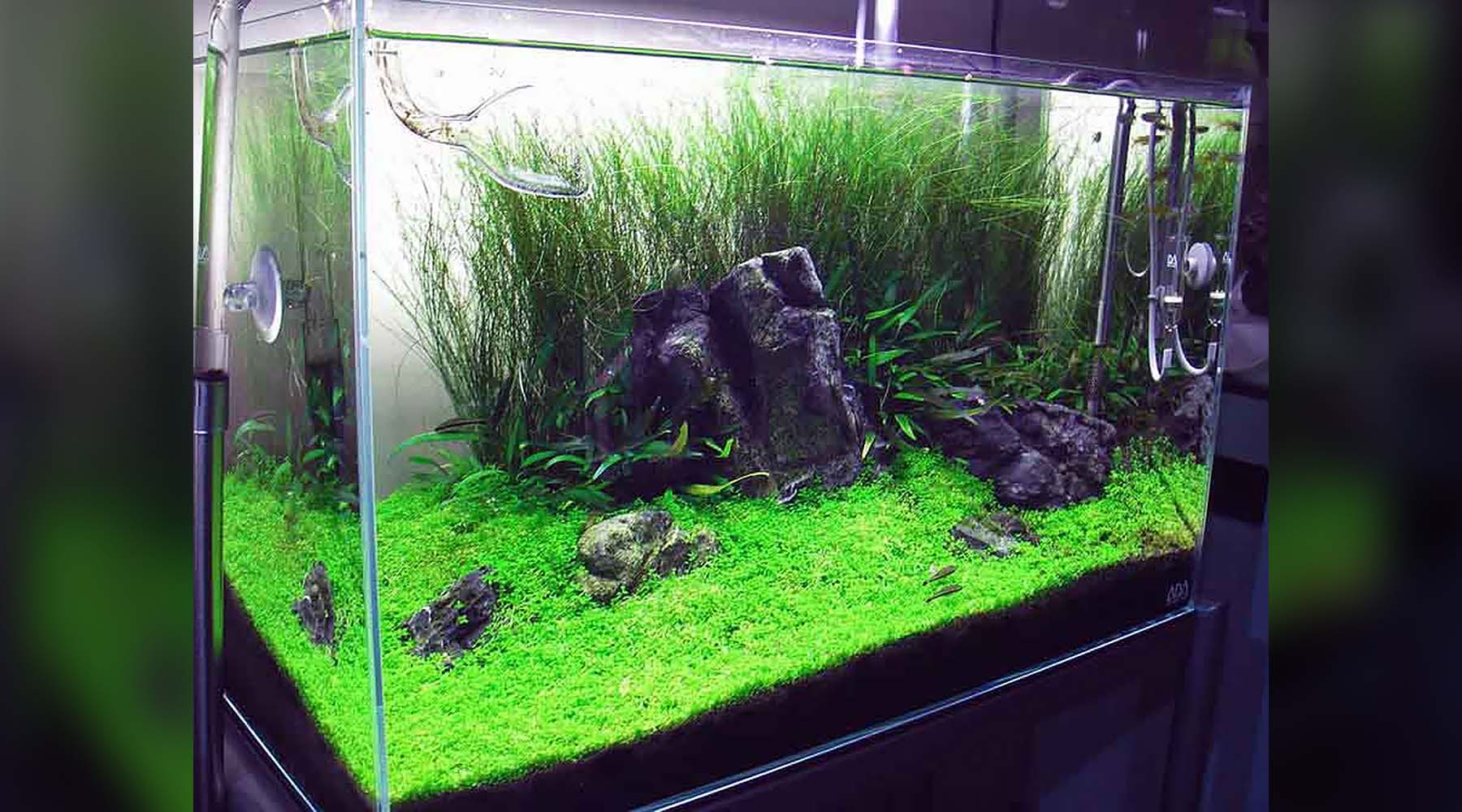 Is CO2 beneficial for low light planted tanks?