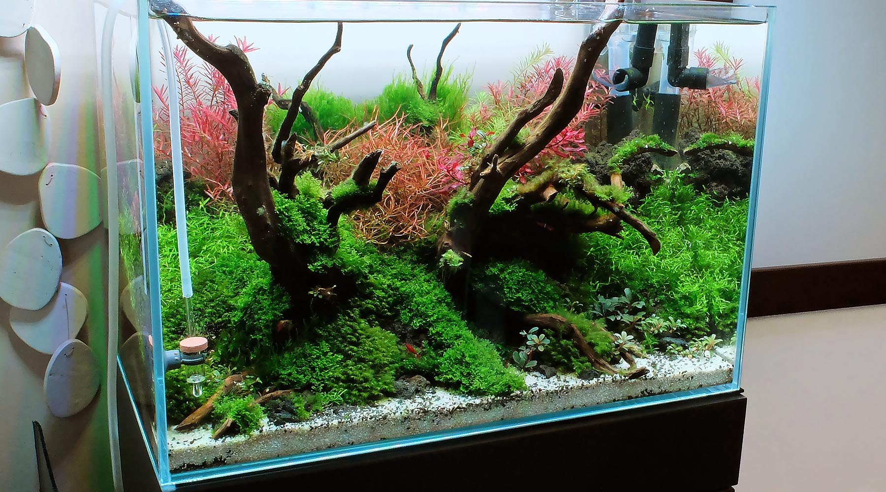 ADA Style Tank by The 2Hr Aquarist