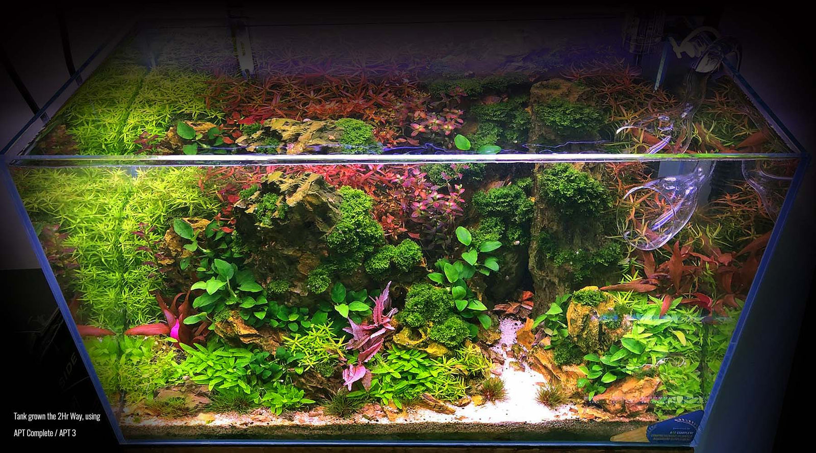 Planted Tank 101 The 2hr Aquarist