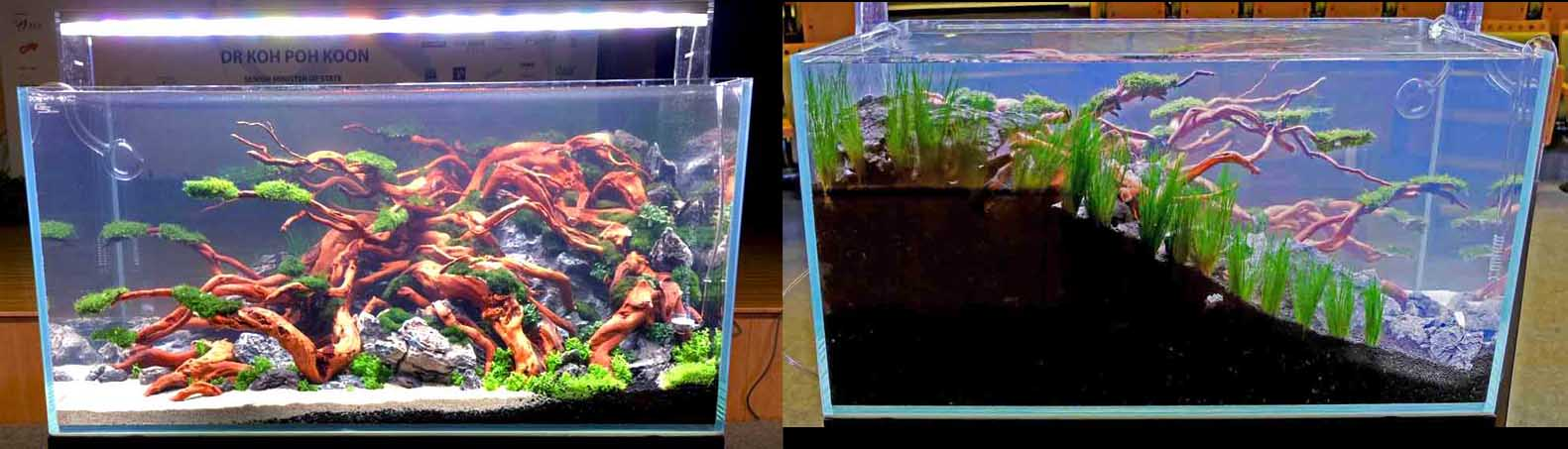 Deep soil aquascape
