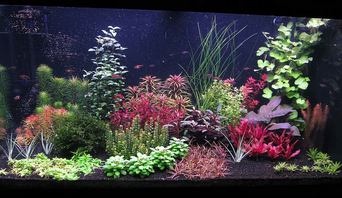 Joe Harvey planted tank