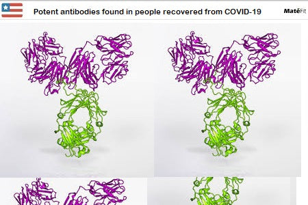 News Potent antibodies found in people recovered from COVID-19 - Teatox Co