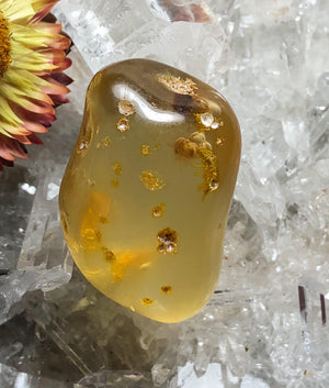 Baltic Amber with Fossilised Insects