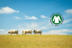 Sheep in the wild GOTS Certification