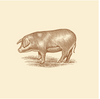 NEW* Pastured Pork Spare Ribs - approximate size - Local Pickup Only