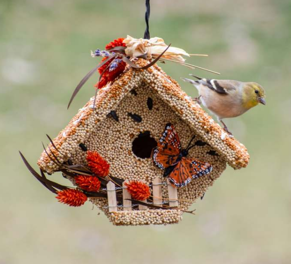 Edible Birdhouse - Butterfly Casita