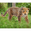 Schleich Jaguar Additional Image 1