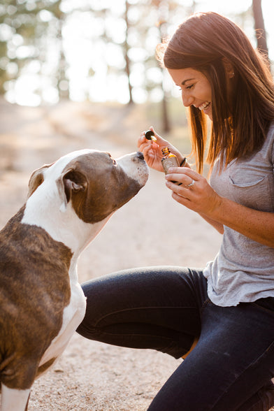 CBD oils, topicals, & products for pets - CBD benefits
