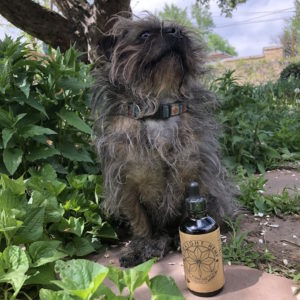 Mascot Agnes loves CBD oil and poses with Straight Hemp oil bottle