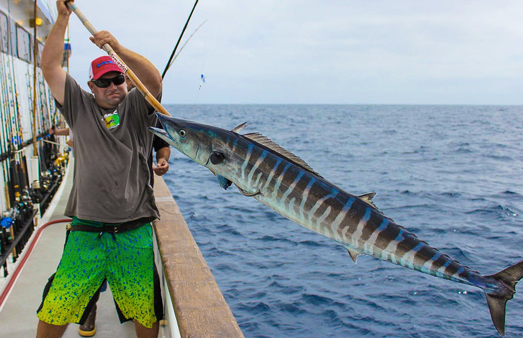 Wahoo-Long Range Fishing-Pelagic-Excel Sportfishing