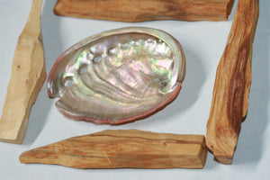 Palo Santo Sticks 4 with Abalone Shell