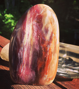 Petrified Wood Standing Polished Stone