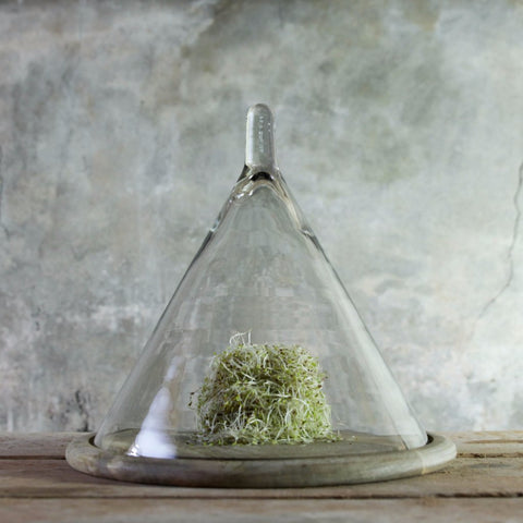 recycled glass conical dome on mango wood base