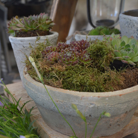aged terracotta shallow dish planter