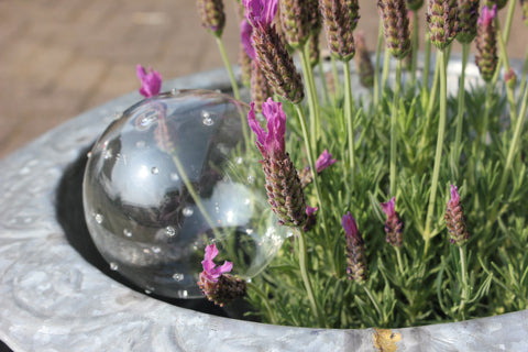 Glass Watering Globe
