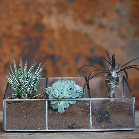 glass and zinc planter