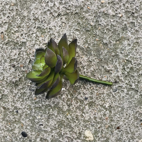 Small Faux Succulent - Greige - Home & Garden - Chiswick, London W4