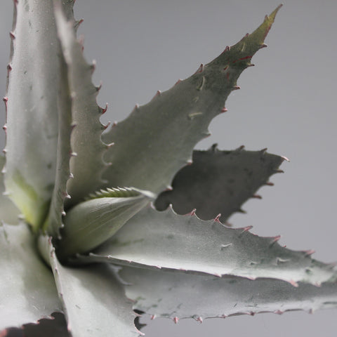 Faux Aloe Plant - Greige - Home & Garden - Chiswick, London W4